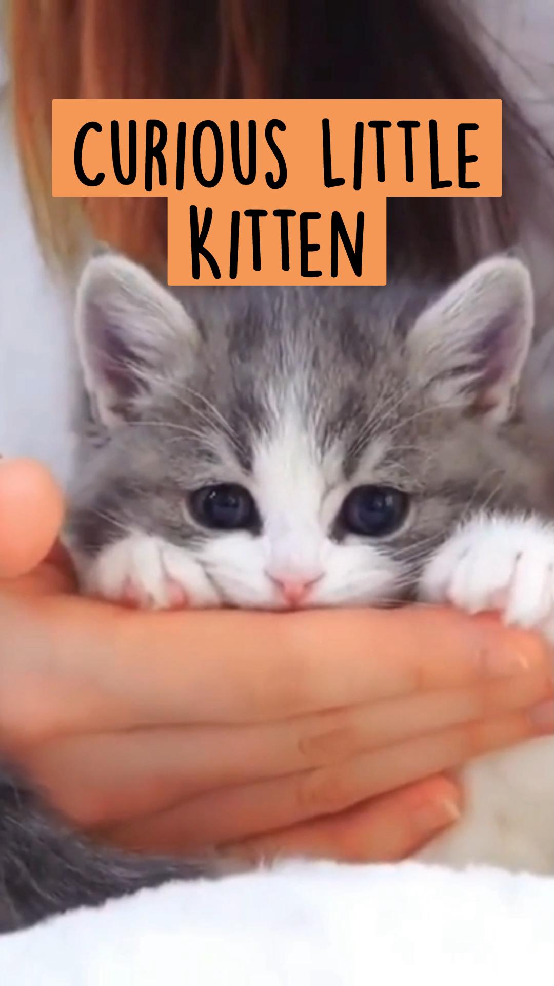 Curious Little Kitten