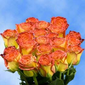 Roses for the Fall!!! Beautiful Color!!