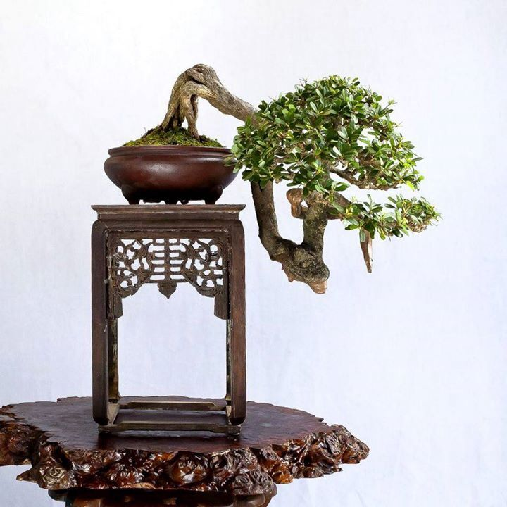 Very cool bonsai with a wonderful display