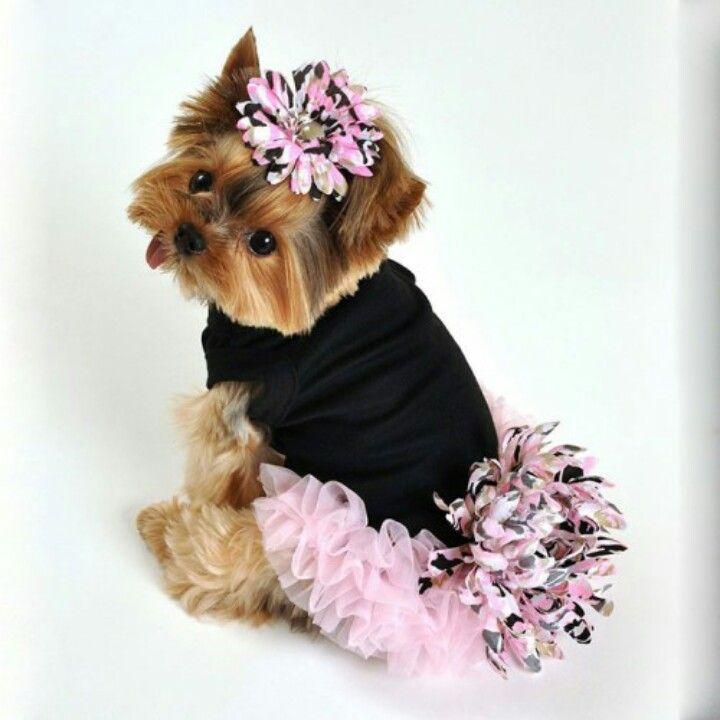 Luciana Dog Dress With Chiffon Ruffles Girl Dog Clothes Girl