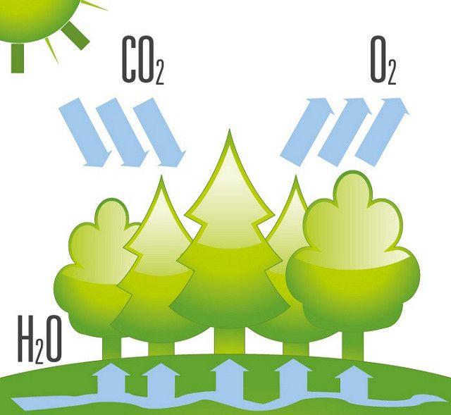 Co2forest Efecto Invernadero Invernadero Facultad De Quimica