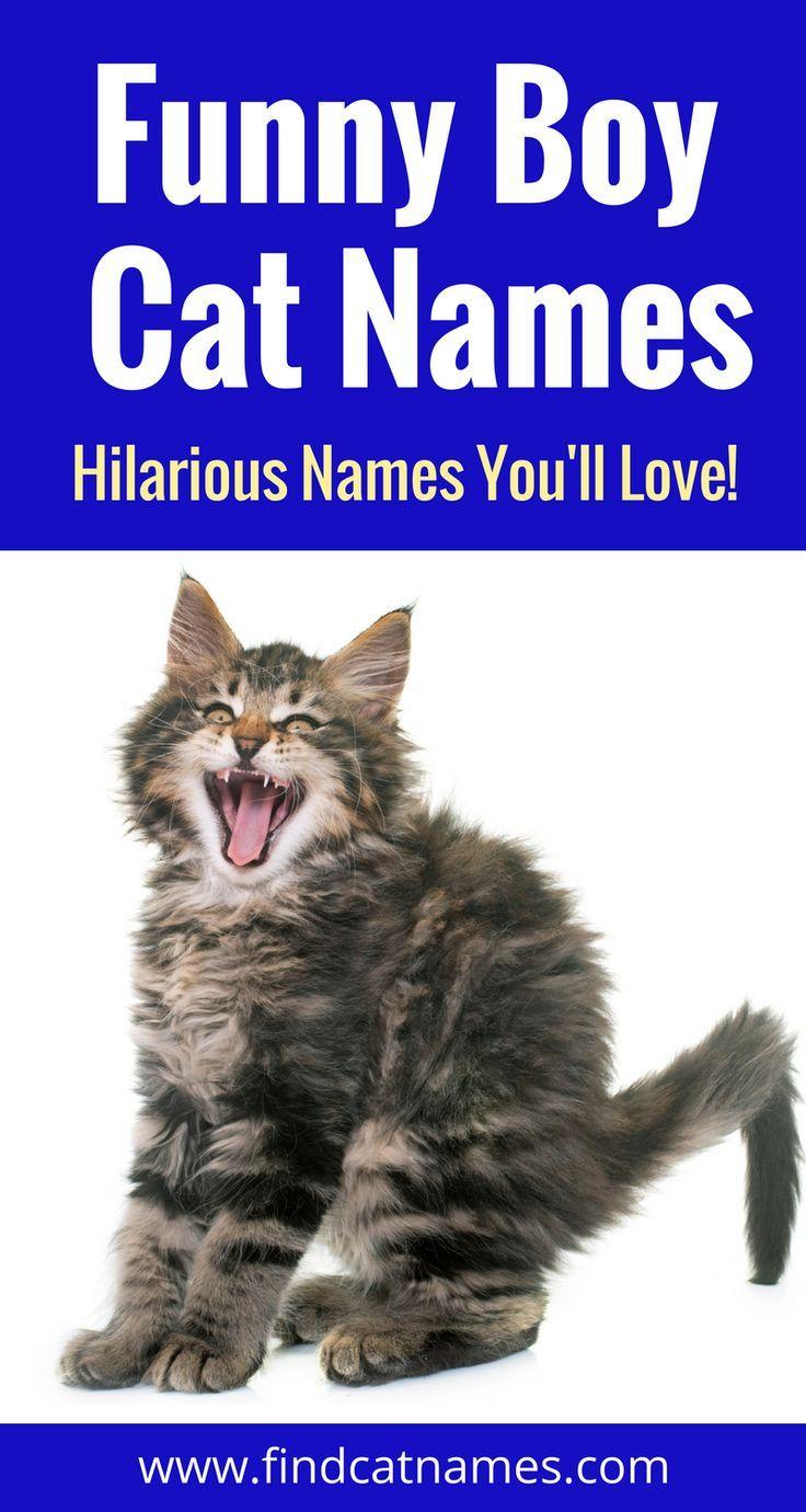 Names Boy cat names, Funny cat names, Cute cat names