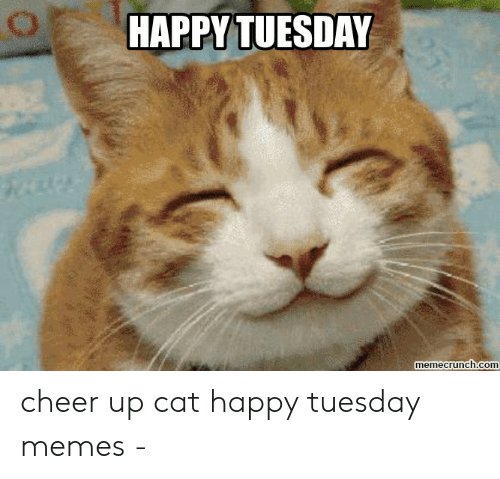 Happy Tuesday Cat Meme (With images) Funny cat images