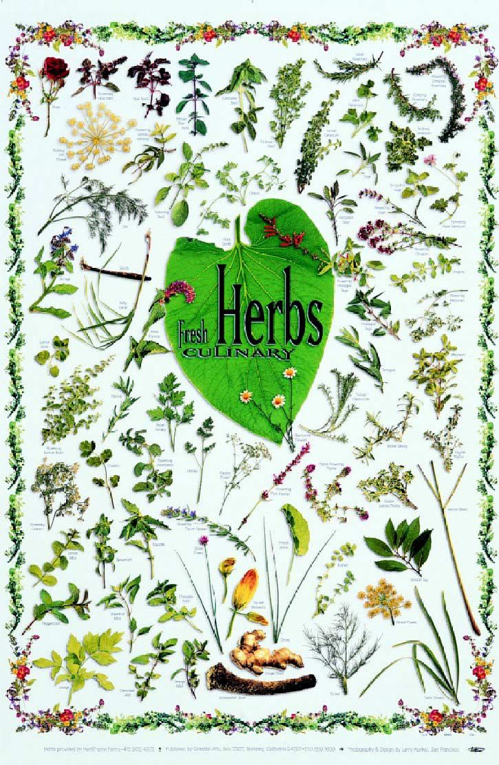 Some Herb Facts and a couple of recipes | Natural medicines ...