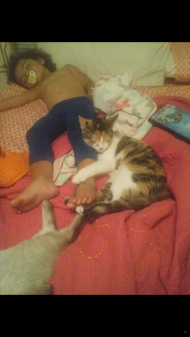 Lost missing cat calico telford tn usa 37690 on