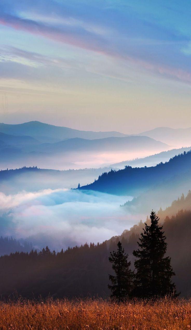 Monica Lenihan #hintergrundbilderblumen  #untitled