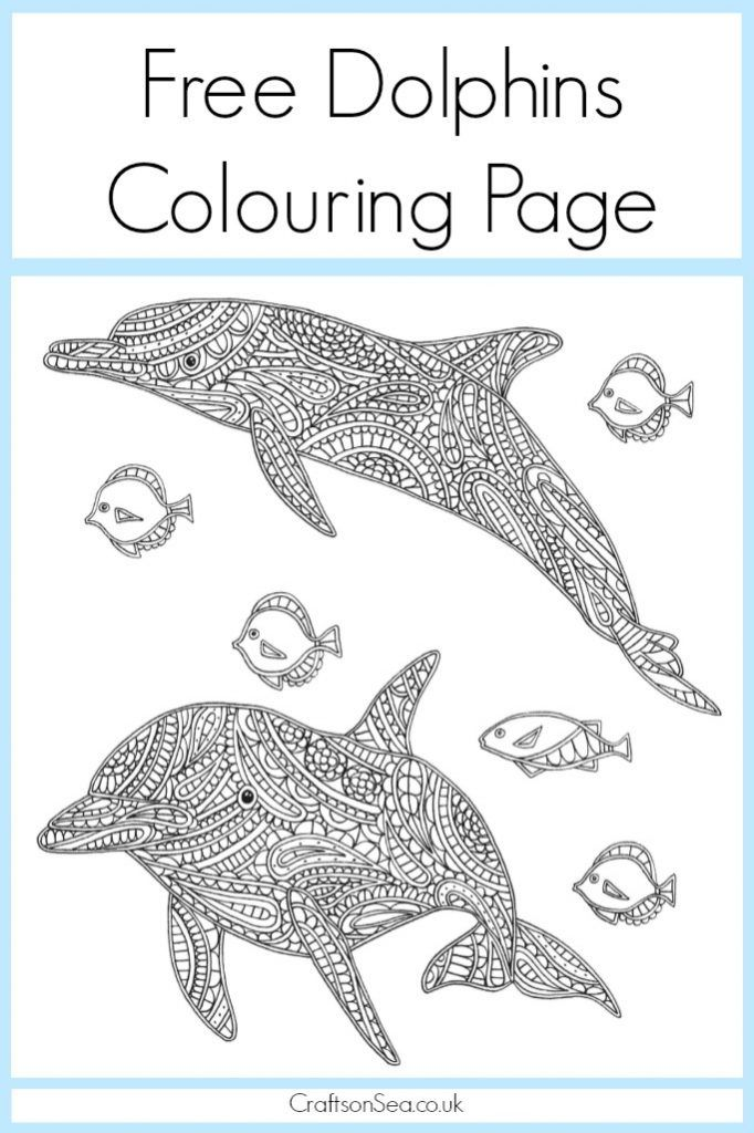 Free Dolphin Colouring Page for Adults and Kids | Dolphin