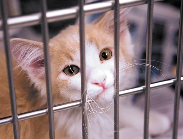 Many Cats And Kittens Are Waiting For Adoption At Woods Humane