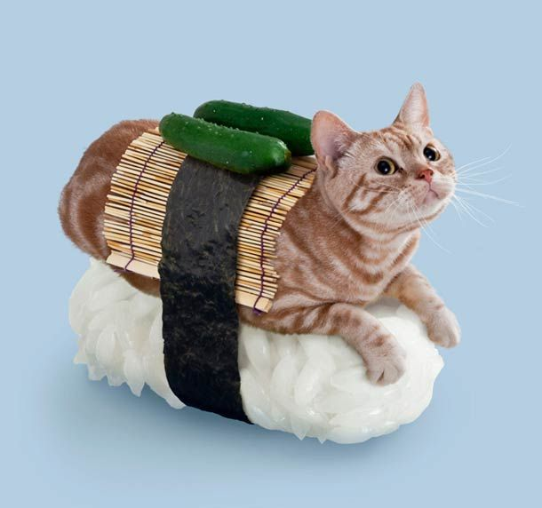 Seu gato com cosplay de sushi