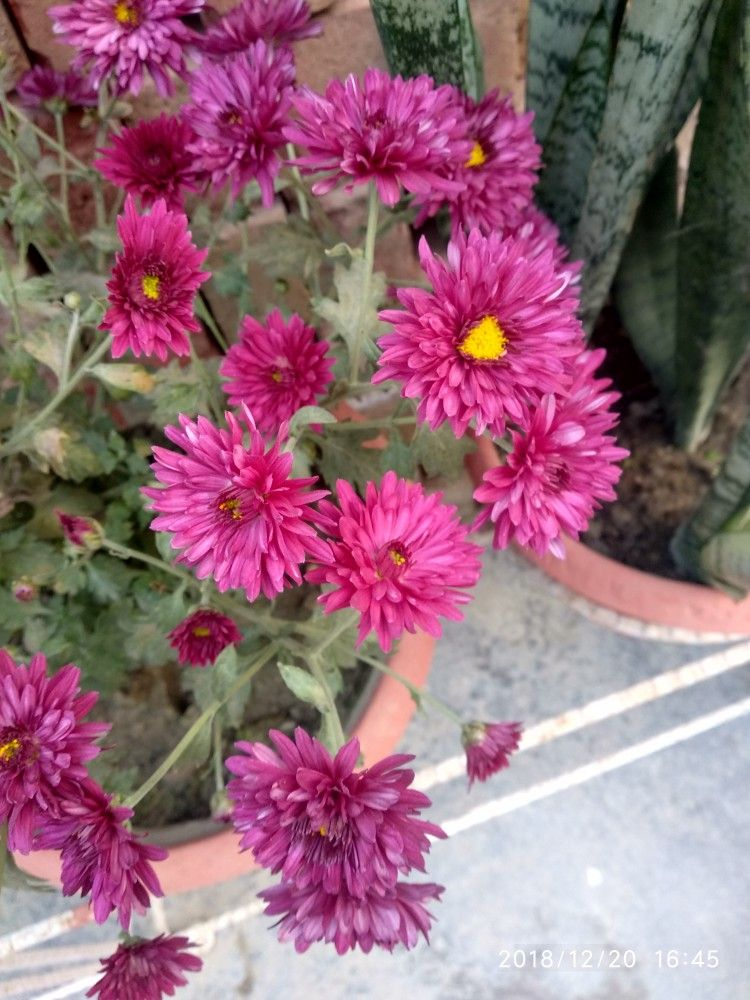 Pin by Vlog on indian plant varieties Plants