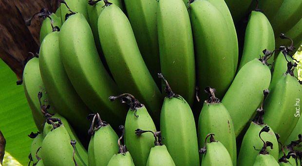Nutrição e Qualidade de Vida: APRENDA A FAZER A BIOMASSA DE BANANA VERDE. por Universo Jatoba
