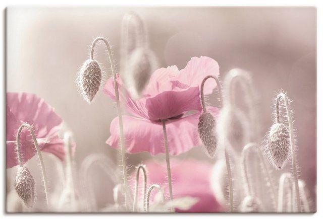 Artland Kunstdruck Poster »Tanja Riedel: Rosa Mohnblumen Zeit« online kaufen | OTTO #flowershintergrundbilder