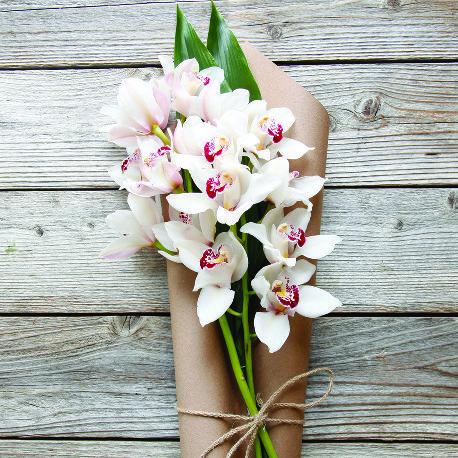 Pin On Blossom