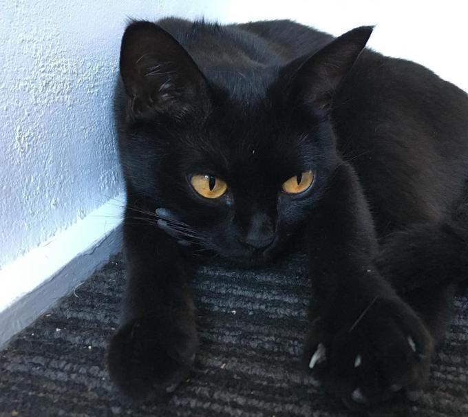 Black Cat Appreciation Day Black Cat Appreciation Day Black Cat Day National Black Cat Day