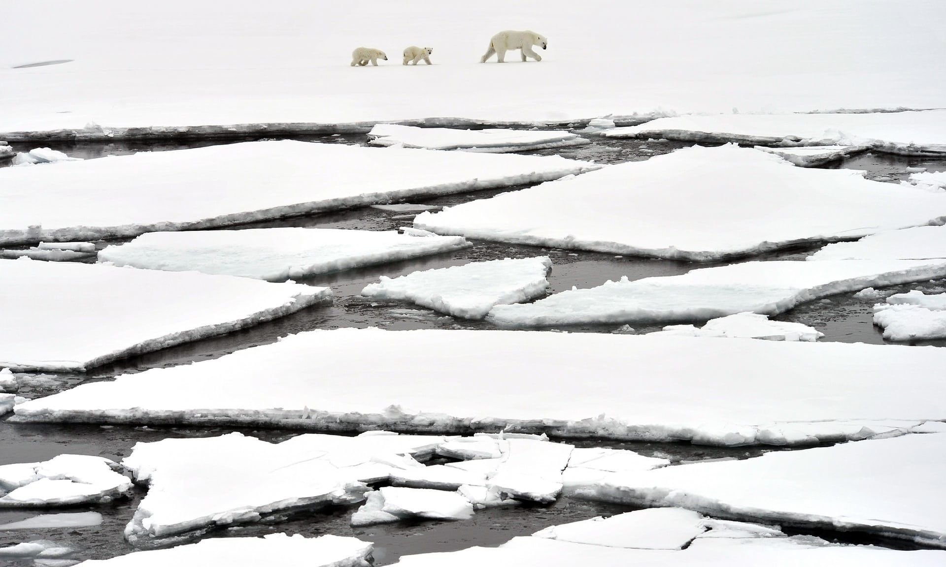 Melting Arctic ice cap falls to well below average   Environment   The Guardian