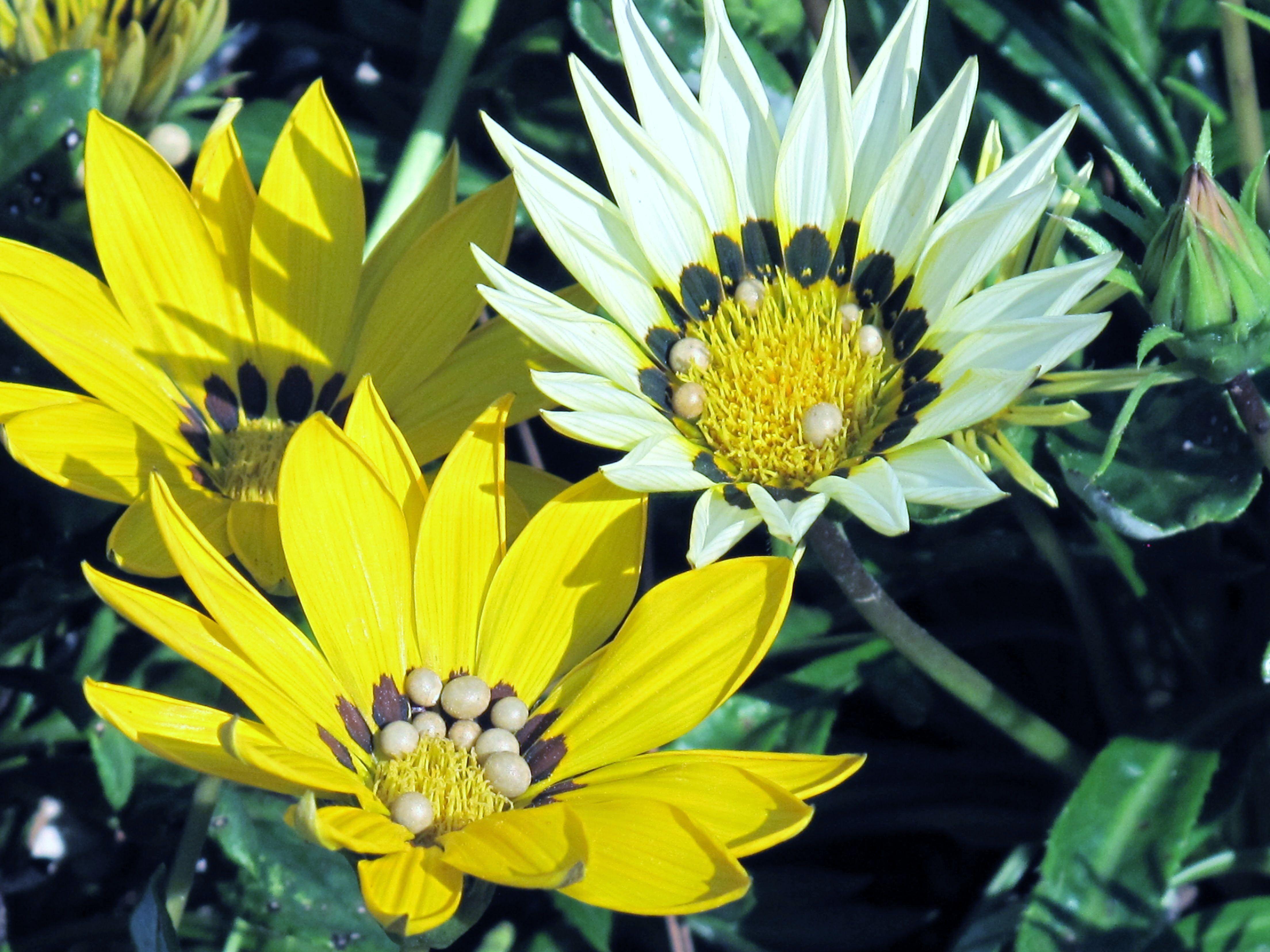 Flowers.  Photo by Liz Baska