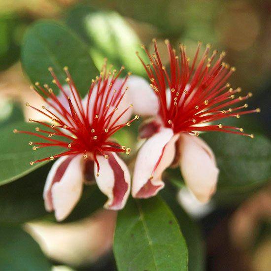 plants to please florida gardeners