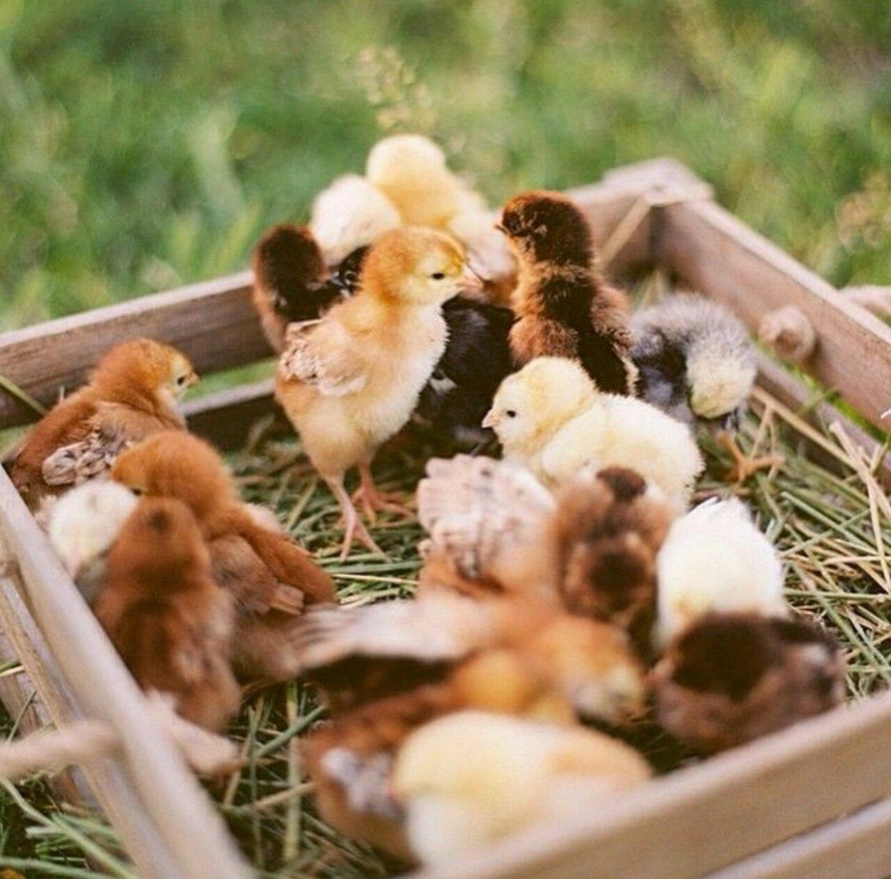 Country Woman At Heart | Adorable Animals | Pinterest ...
