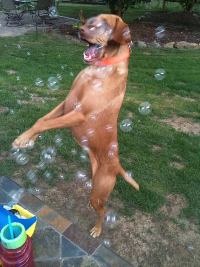 One word: BUBBLES.