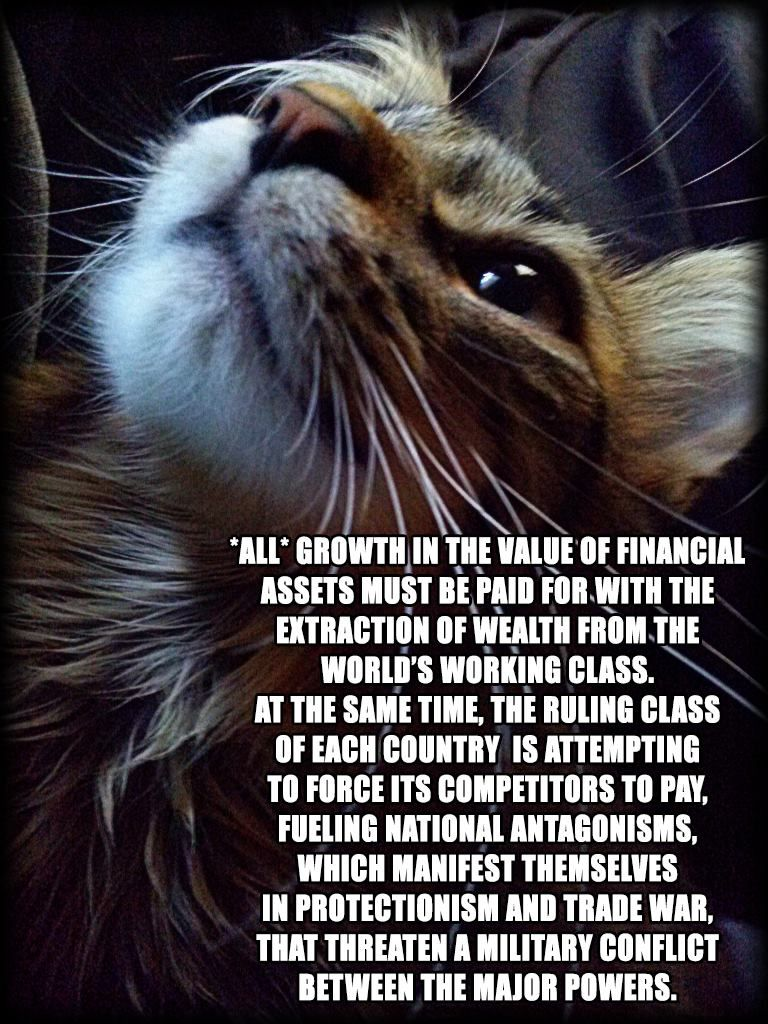 Meow Cute Kitten Anarchist Instacat Kitty Animal Catlover Cats Catstagram Animals Anarchism Cat Catlove Catsofinstagra Cats Cat Facts Cat Lovers
