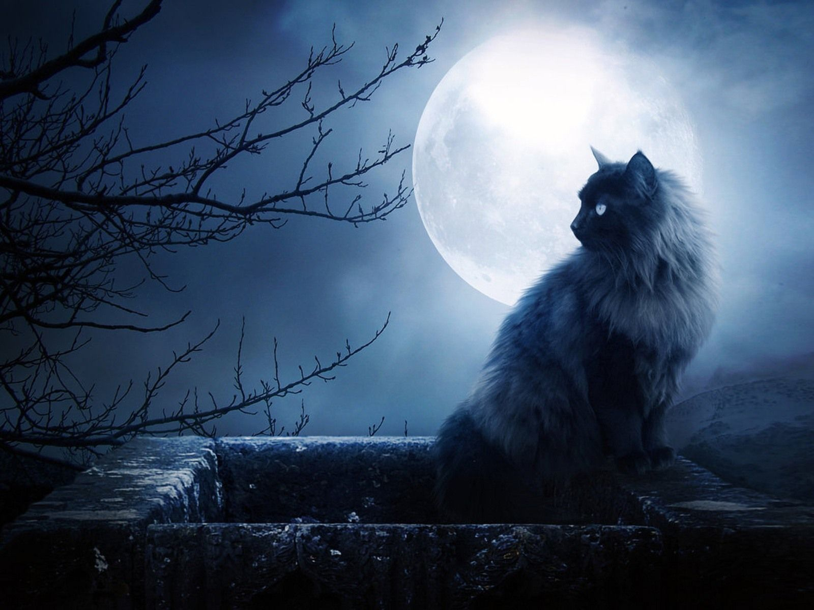 Beautiful Wallpaper Night Cat - b81498e6f61ca4f5ecf0307f8e16d462  Gallery.jpg