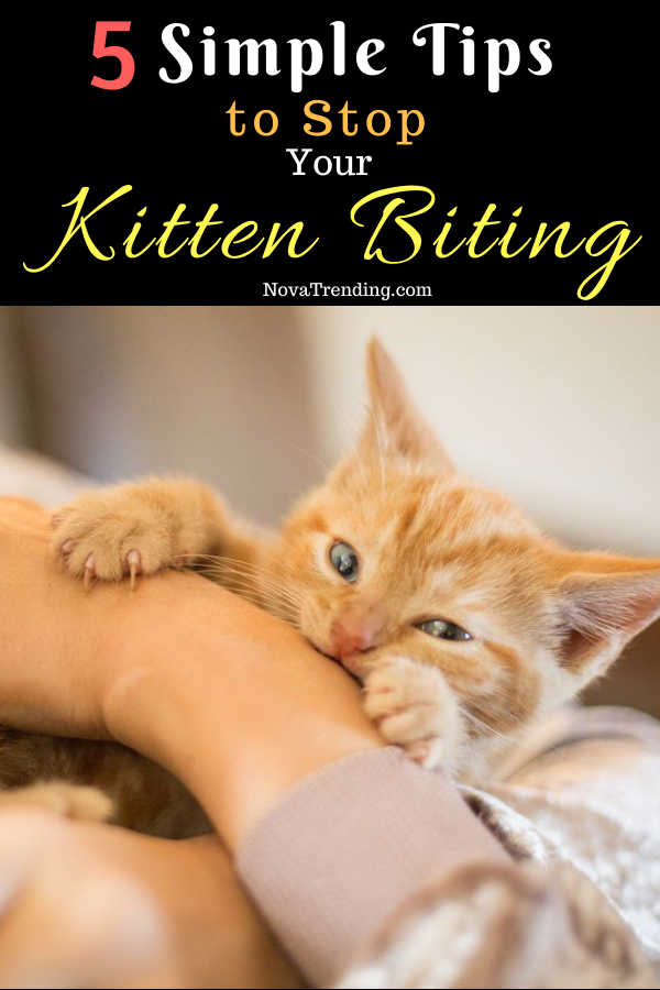 5 Simple Tips To Stop Your Kitten Biting Kitten Biting Kitten Tips