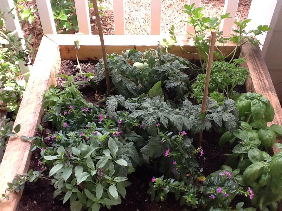 les 25 meilleures id es de la cat gorie jardins d 39 herbes de patio sur pinterest comment. Black Bedroom Furniture Sets. Home Design Ideas