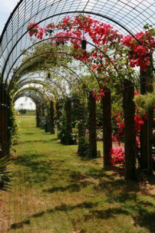 Rewire Arbor Idea For Over Driveway On South Side Of House Small Garden Arbour Garden Arbor Garden