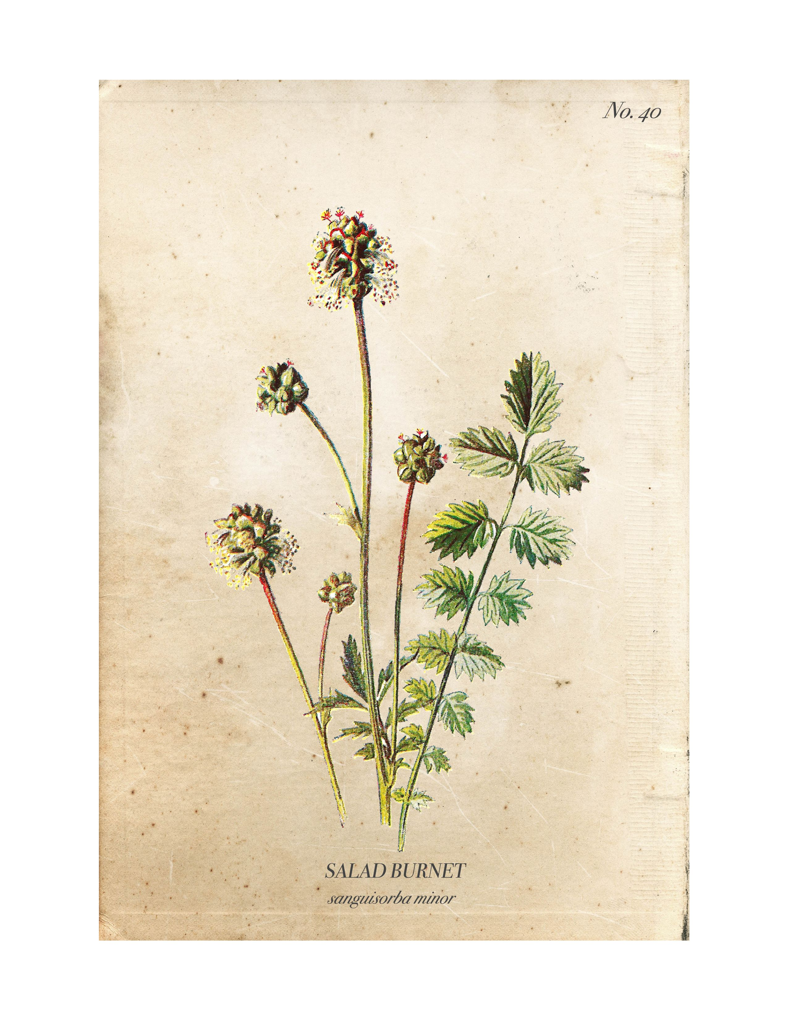 Vintage Wild Flower Botanical Prints Botanical prints