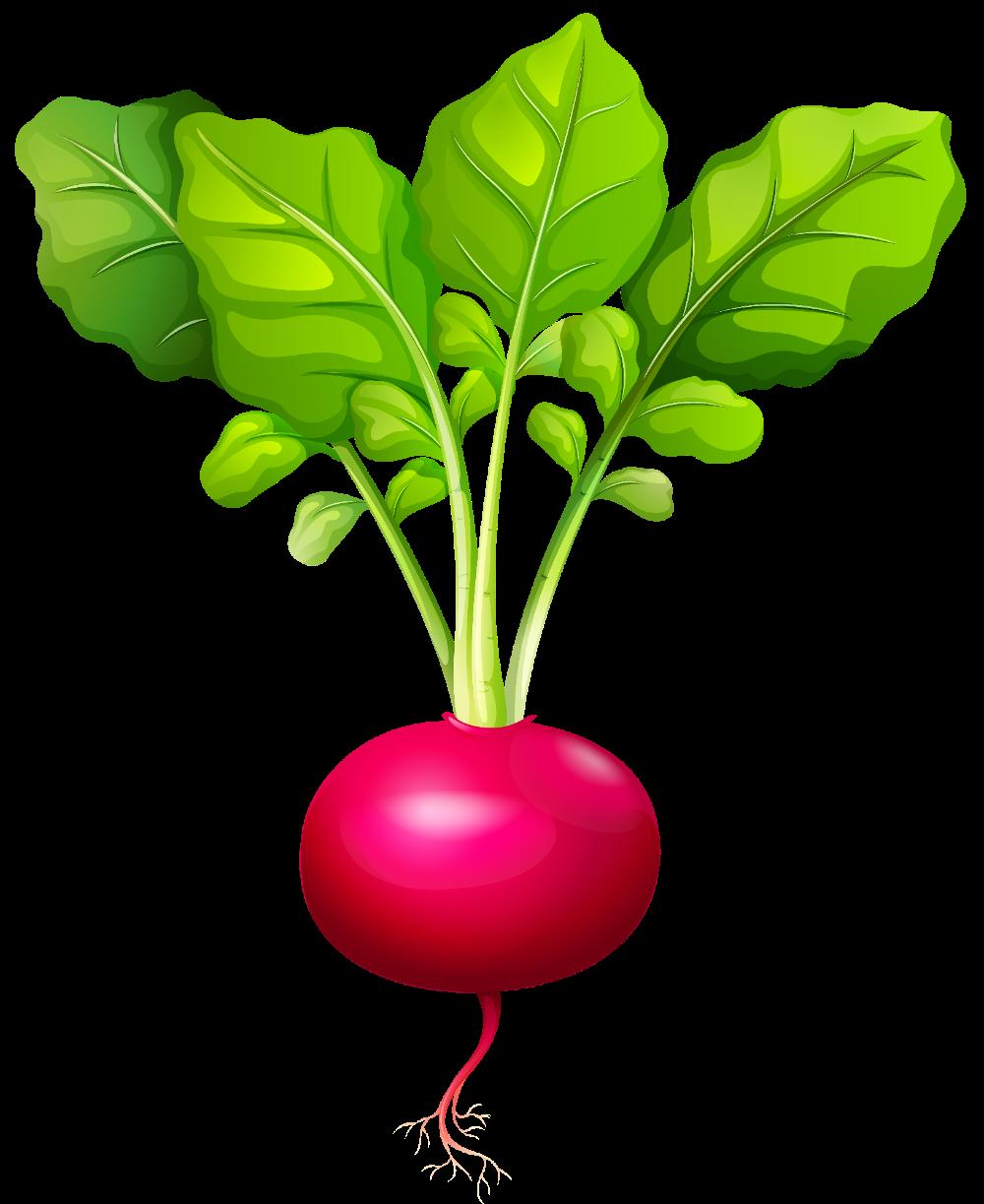 Cliparts Page 17 Best Clipart Images Download For You Vegetable Pictures Vegetables Vegetable Illustration