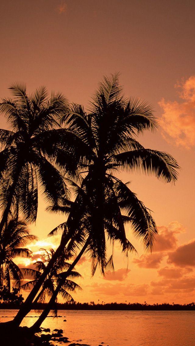 Palm Tree Top HD desktop wallpaper Widescreen High
