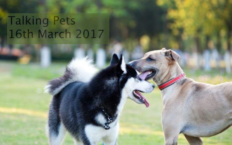 Talking Pets 16th March - Dr Jo's Blog