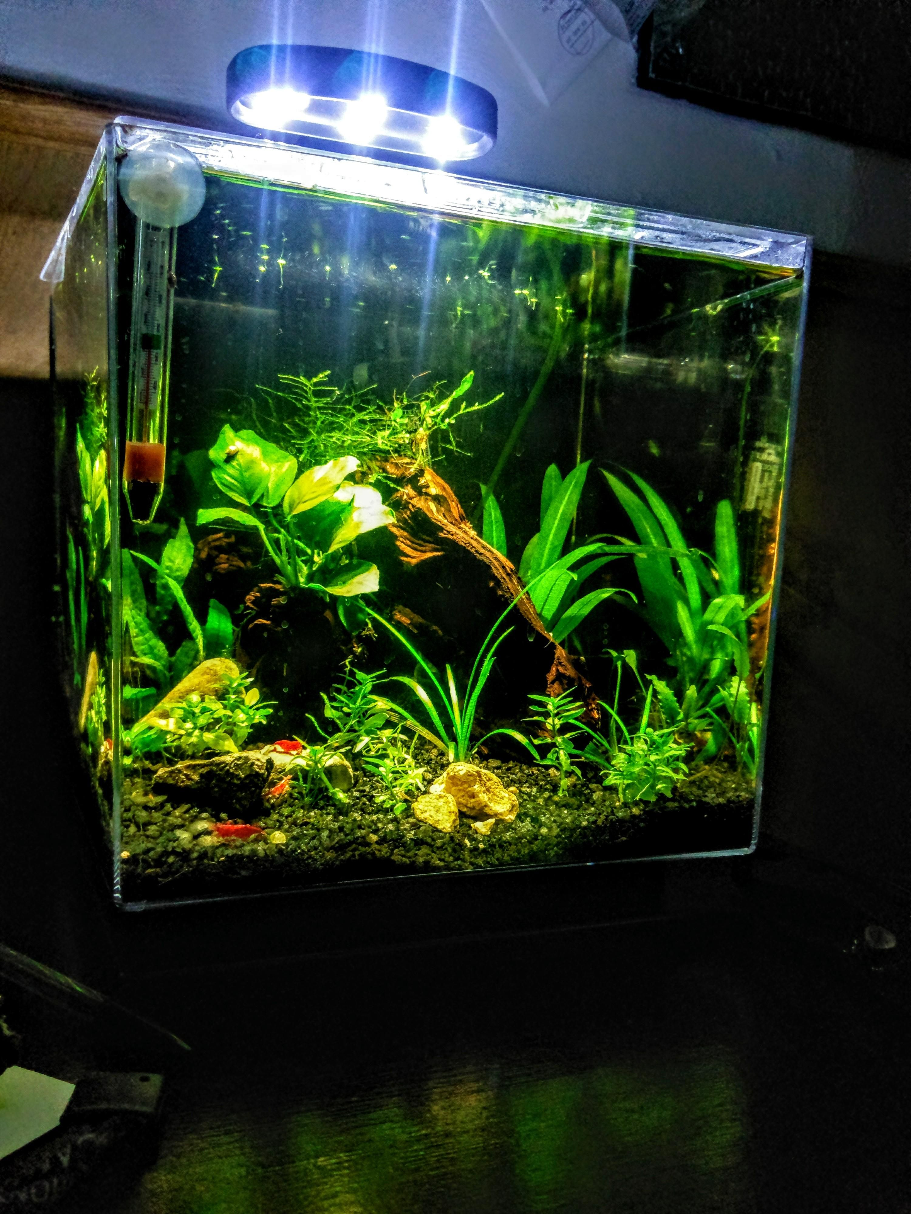 UNS Ultra Clear Tanks [CUBES]