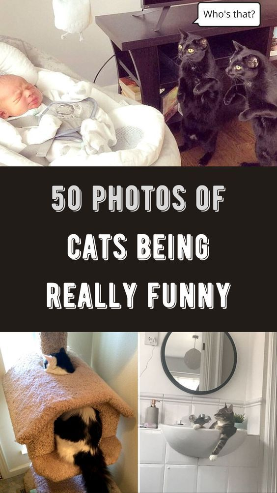 50 photos of cats being really funny