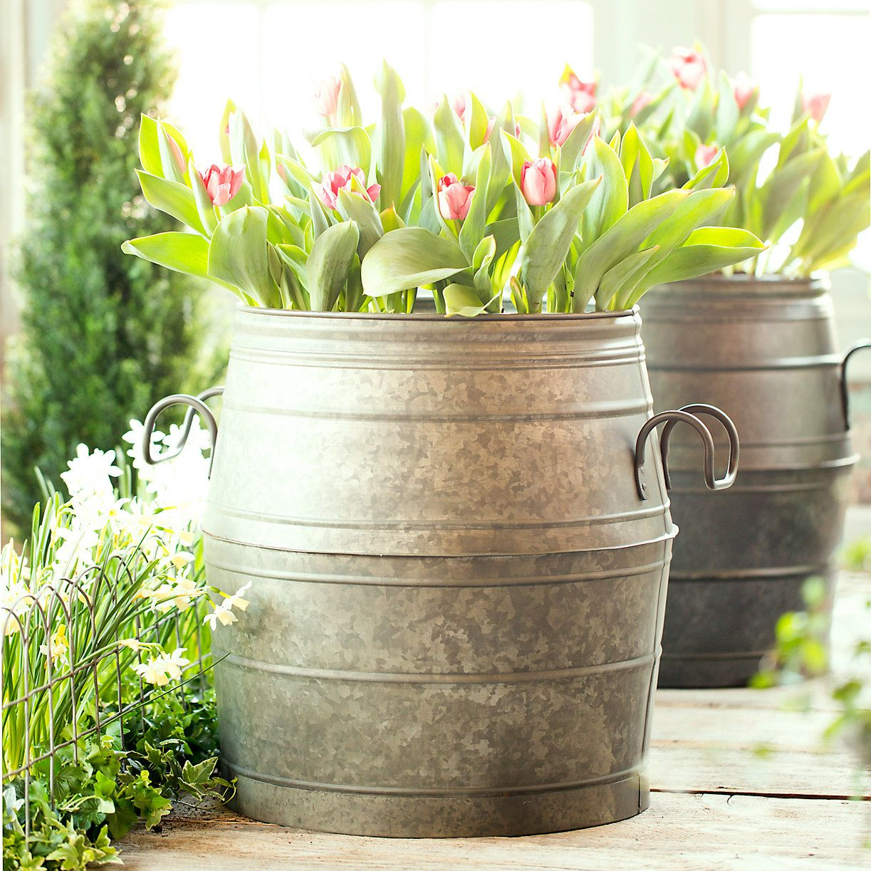 Galvanized Barrel Planter Terrain Barrel Planter Porch Plants Front Porch Plants