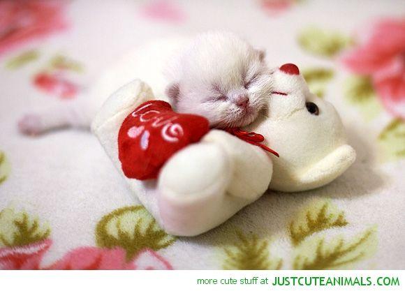 White Baby Kittens Sleeping Google Search Sleeping Kitten