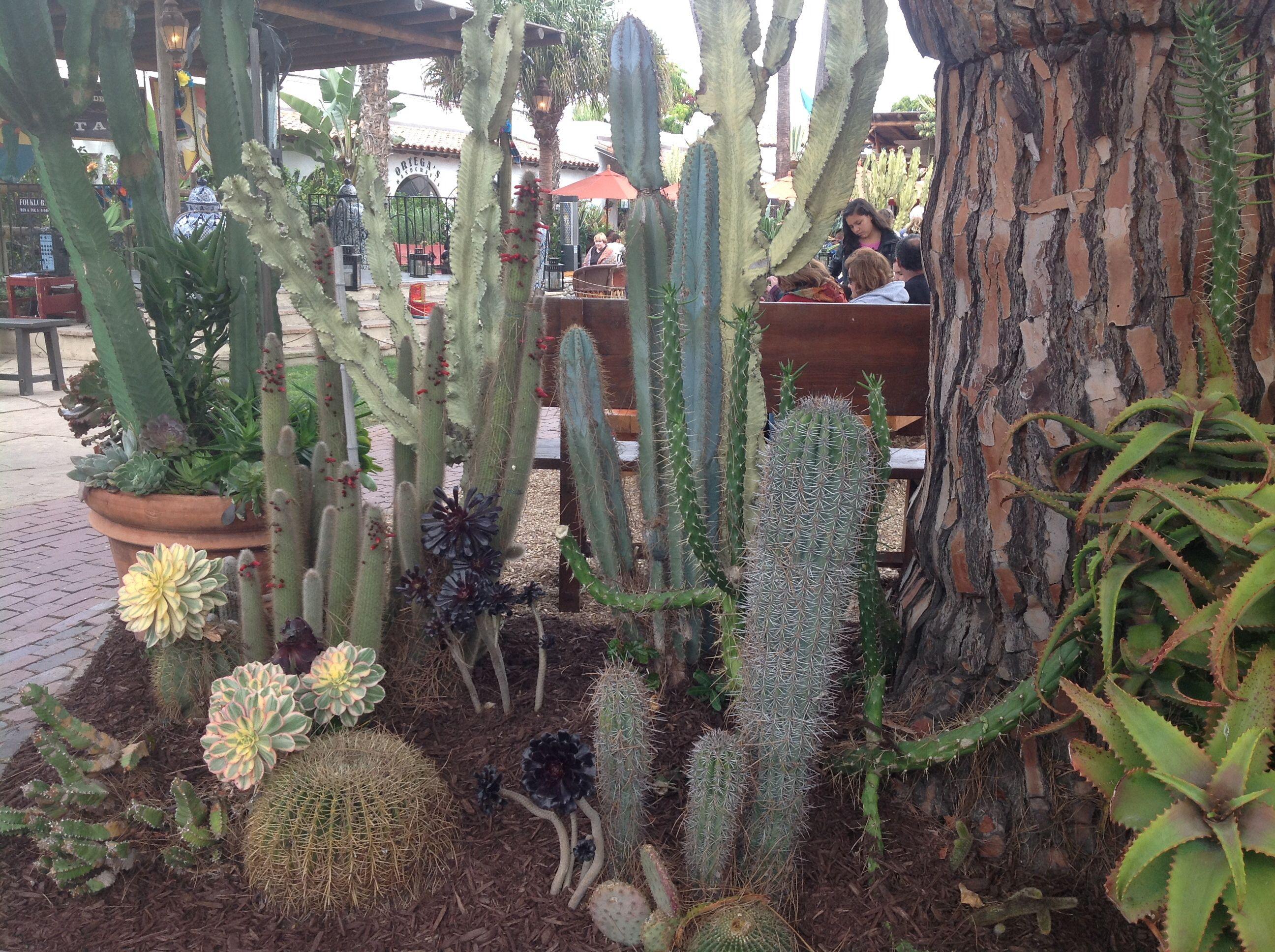 Cactus on Palm tree.. : Grows on You   Name Cactus Palm Tree