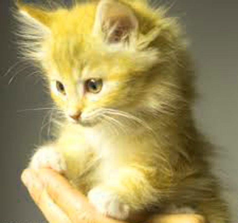 Kitten Cute Cat Images For Whatsapp Dp Kitten