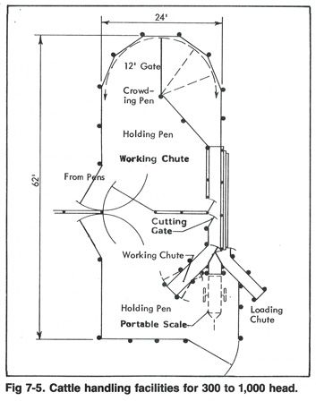 diagram of cattle handling facilities for 300 to 1000 head. Black Bedroom Furniture Sets. Home Design Ideas
