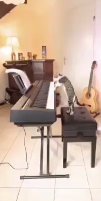 Photo of Katze + Klavier + Meaww