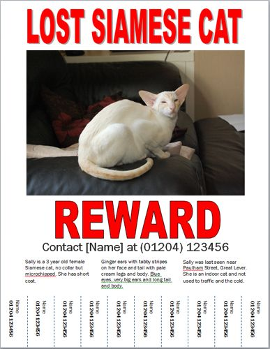 A Missing Cat Poster Is Essential For Finding A Lost Cat, Find Out How To  Lost Pet Template
