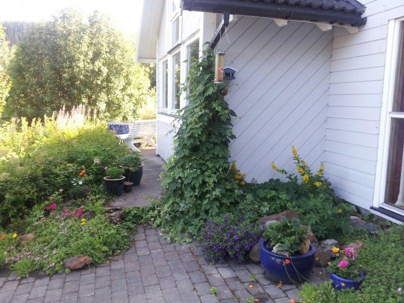Beautiful Norwegian Garden Scandinavian Garden Garden Beautiful
