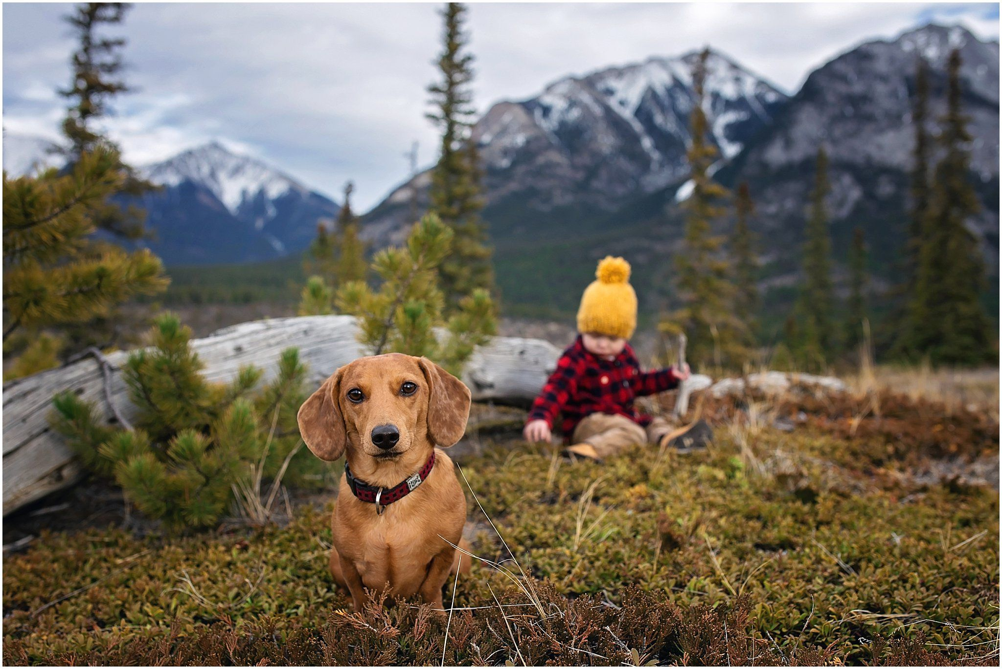 Adventure Puppies Dapple Dachshund Mountain Dogs Mans Best