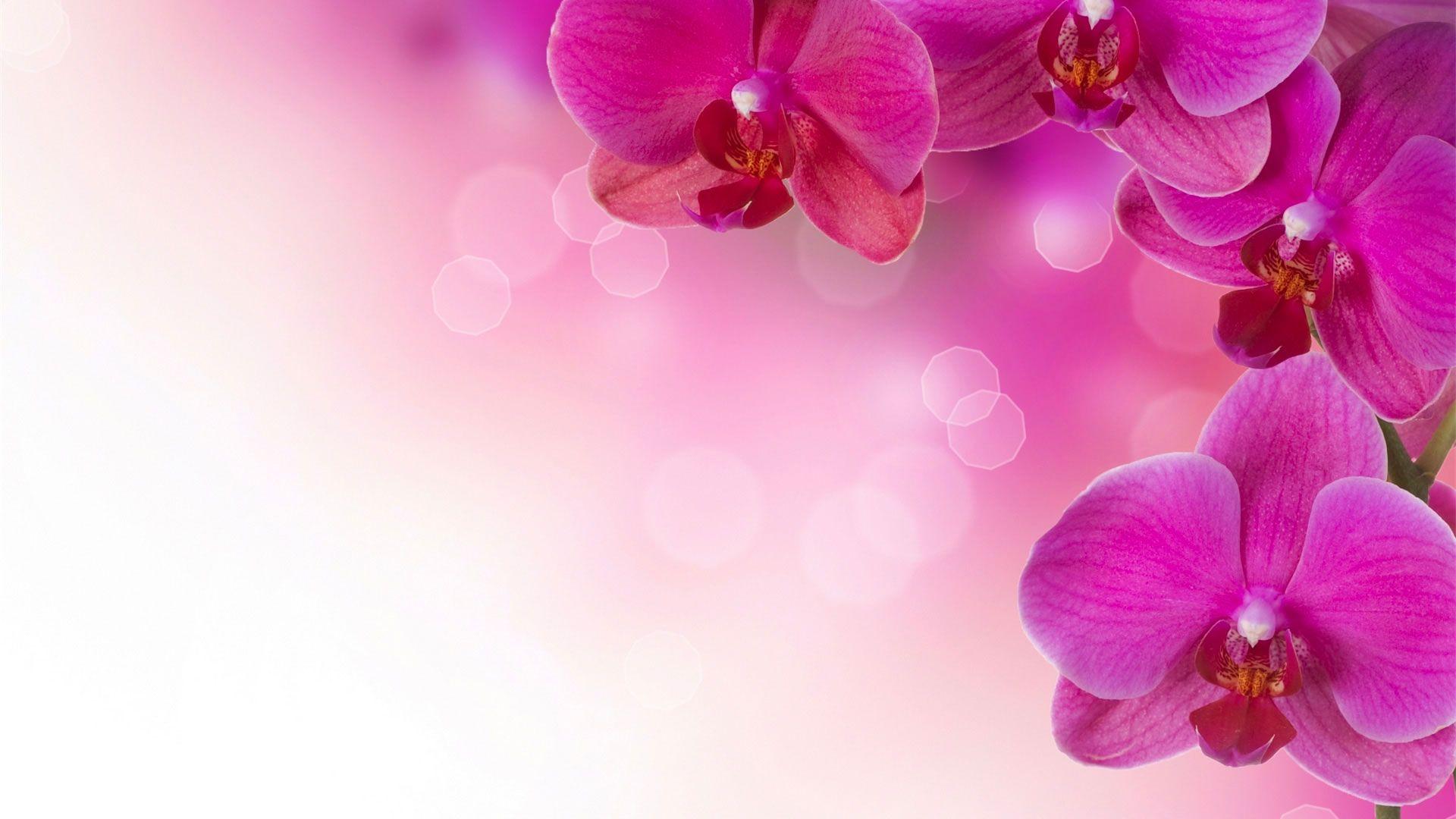 Hd pics photos flowers pink orchid desktop background wallpaper hd pics photos flowers pink orchid desktop background wallpaper mightylinksfo