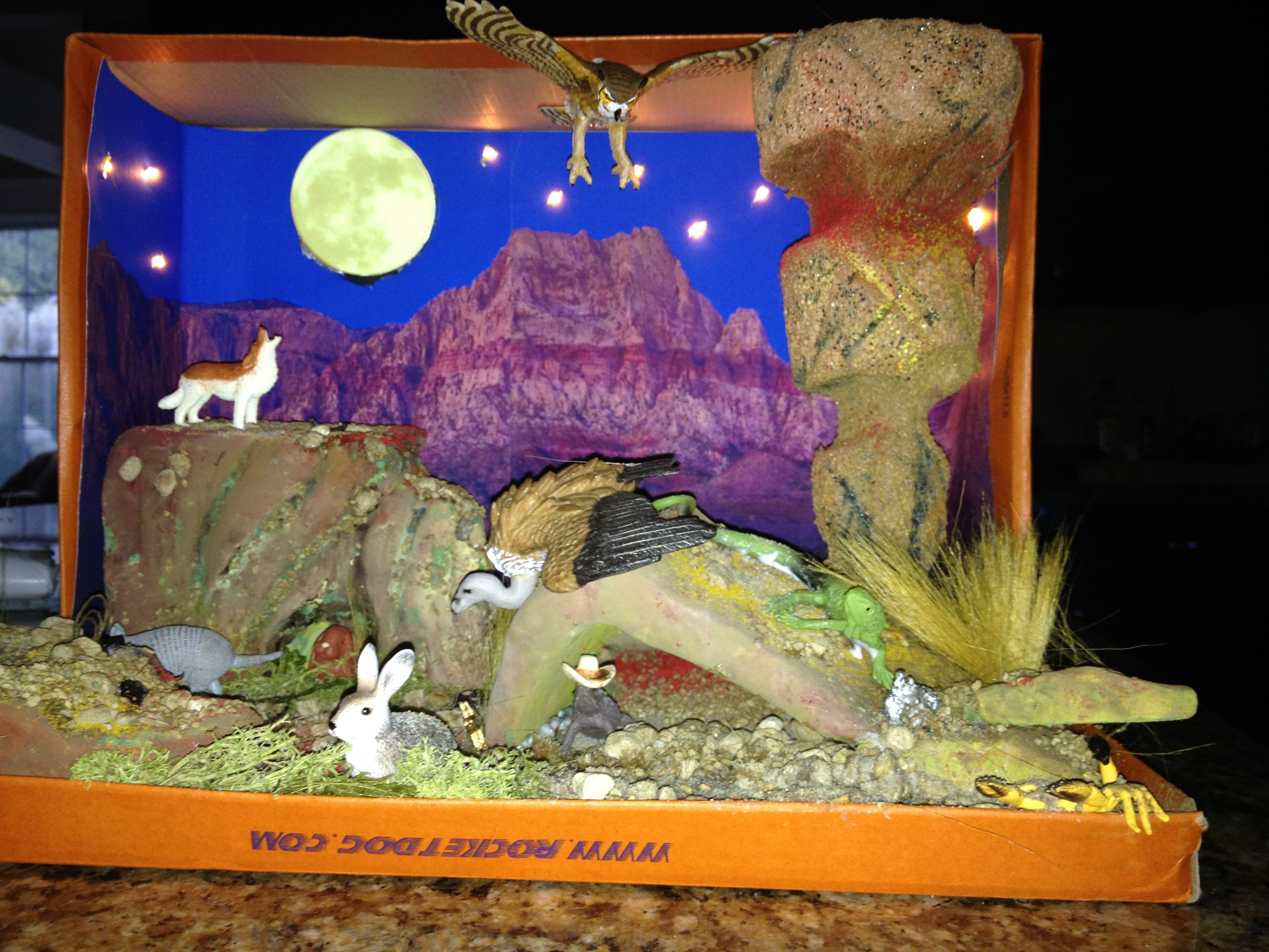 Shoebox Desert Diorama made for 3rd grade project | Desert