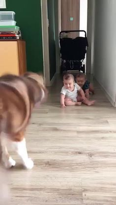 Dog is clearly outnumbered