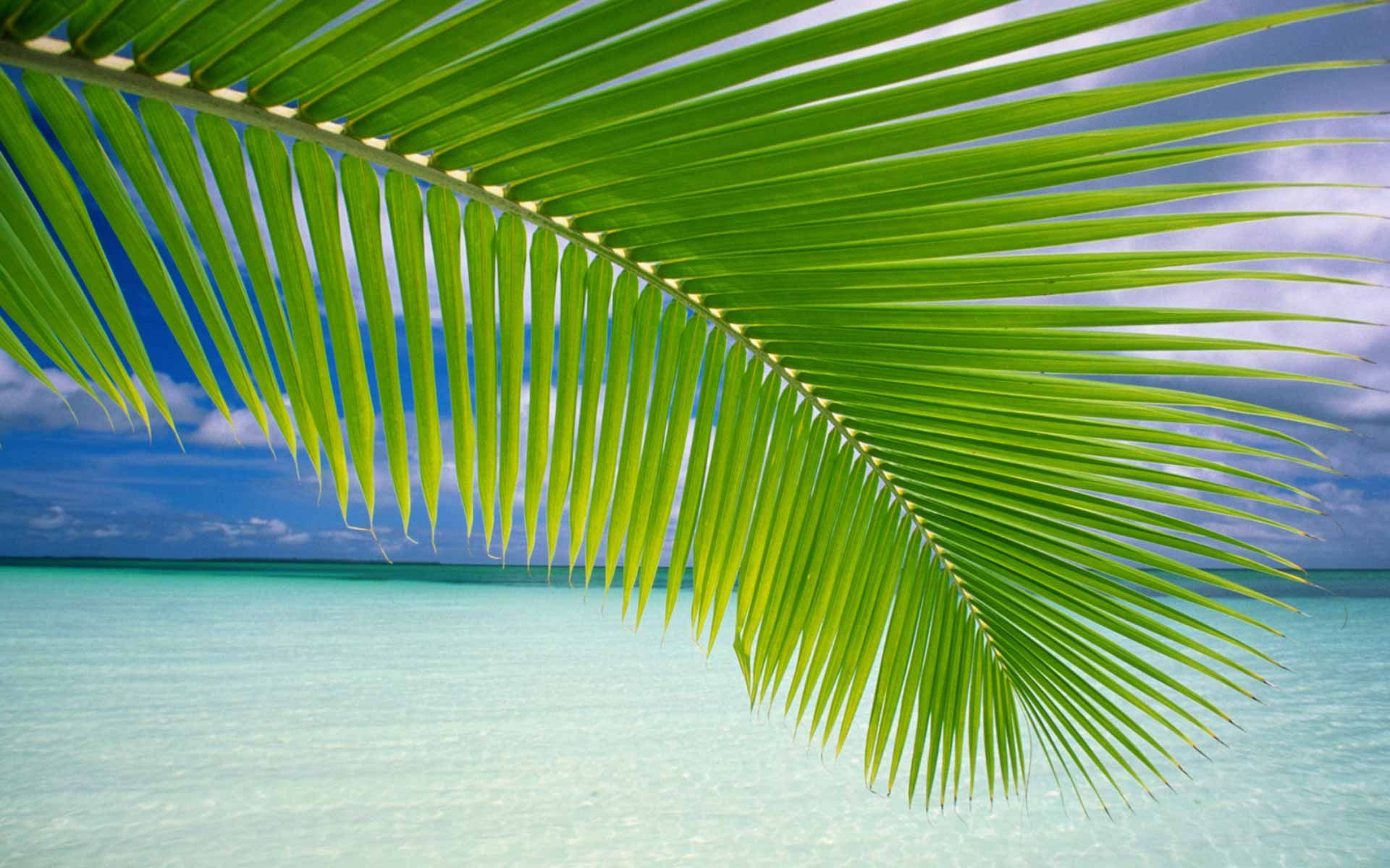 Wallpapers Background Cool Laptop Dell Island Beach Beach Wallpaper Nature Wallpaper Palm Leaf Wallpaper