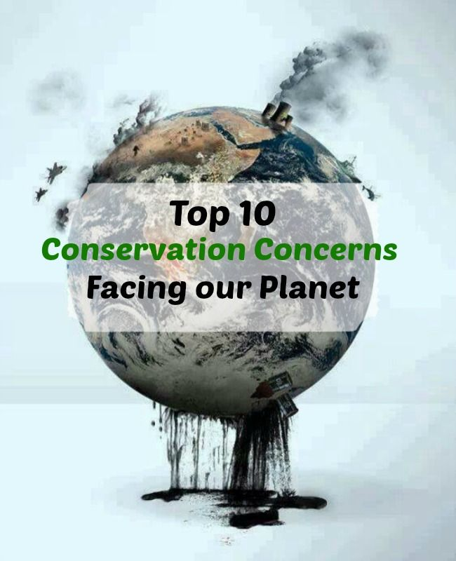 Top 10 Environmental Issues Facing Our Planet Greenliving