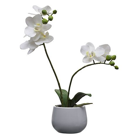 House by john lewis artificial orchid white small artificial buy house by john lewis artificial orchid white small from our artificial flowers plants range at john lewis mightylinksfo