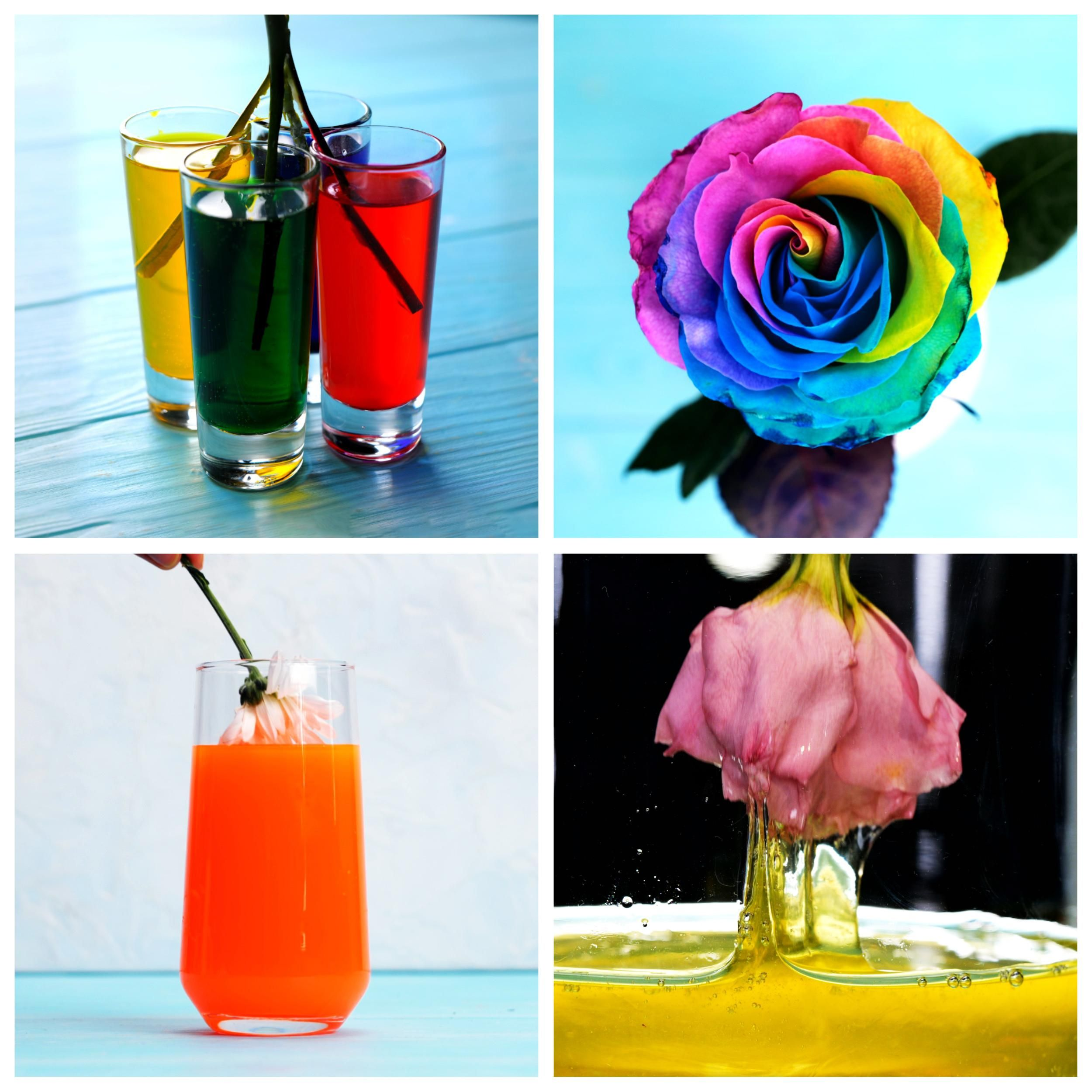 Amazing flower hacks you definitely need to know for the future